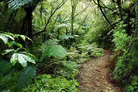 Walking trail in New Zealand