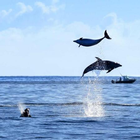 homepage-dolphins.jpg
