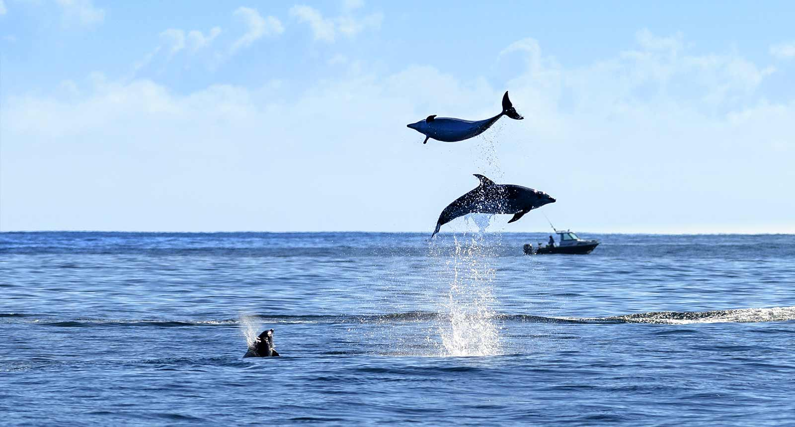 Fullers Dolphin Watching Cruise Bay Of Islands Travel