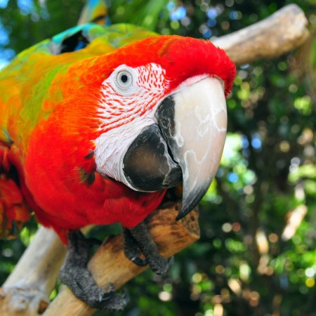 the parrot place zoo