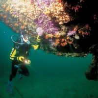 rainbow warrior wreck dive