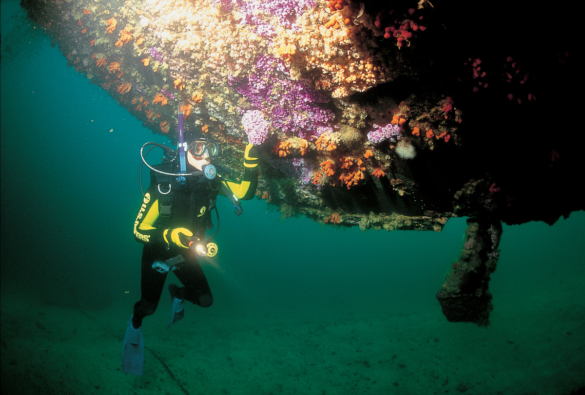 Rainbow Warrior Wreck Dive Bay Of Islands Travel Guide